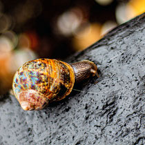 """No.37. """"Snail's Pace"""""""
