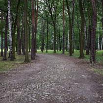 Weg naar crematorium Birkenau