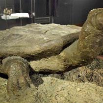Schildpad Majdanek - stiekem gemaakt door gevangene als waarschuwing en was verstopt bij de ingang totdat deze werd ontdekt door de nazi's
