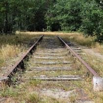 89) Een deel van de oude kampspoorlijn aan de rand van het bos