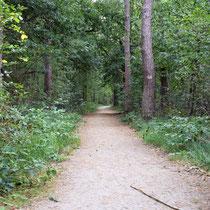 86) Pad naar overige delen oude kampspoorlijn en fusilladeplaats in het bos