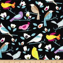 Birds Study
