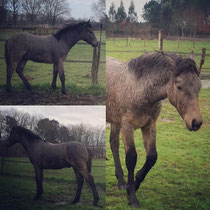 Fursy de Lamélie, 7 mois