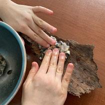 Fettfutter auf Borke oder in Kiefernzapfen schmieren, Foto: schlaubatz