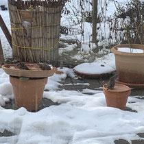 Spatzenbad in der beheizbaren Vogeltränke, Foto: schlaubatz