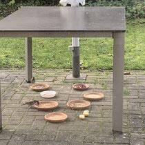 Haussperlinge am Vogel-Buffet