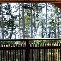 Blinzeln Sie beim Sonnenbaden auf dem Balkon ab und zu einmal, um das Glitzern und Strahlen des blauen Sees einzufangen! Unser Balkon ist auch ein akustisches Highlight.  Hier hören Sie das Rauschen des Sees besonders gut!