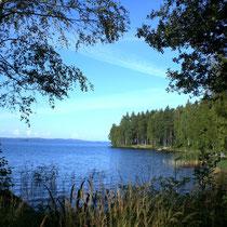 Gehen Sie am Ufer spazieren und genießen Sie den Blick in die Bucht vor dem Haus Richtung Hauptsee.