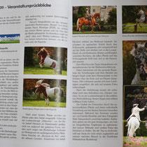 Einblick in das Jahrbuch der Fürstlichen Hofreitschule Bückeburg 2011, mit meinem Bericht zum Fotoseminar mit Niels Stappenbeck.