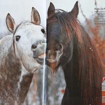 """Auch in die Zeitschrift """"Pegasus"""", hat es das Bild von Urano und Nando geschafft."""