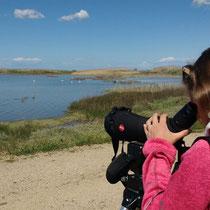 Slang (Oristano)- Birdwatching