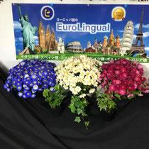 ⑤ フランスをイメージしたお花 3