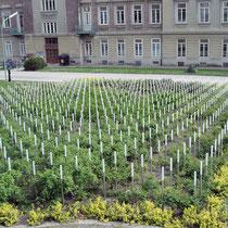 Gedenkstätte für die toten Kinder und Jugendlichen  vom Spiegelgrund- Foto ©MW