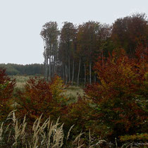 2010 Herbst  im Wienerwald