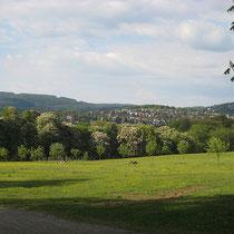Lainzer Tiergarten - © mw