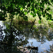Fischteich und sein Biotop