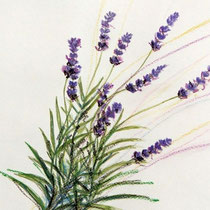 2002 - Lavendel - Aquarellstifte