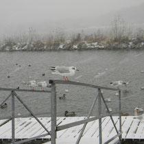 An der Donau im Winter