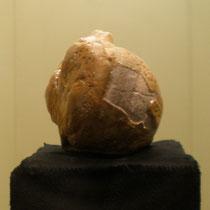 größte fossile Perle der Welt