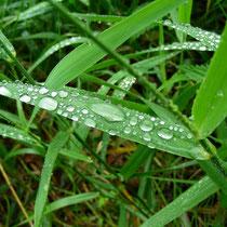 Regen im Wienerwald