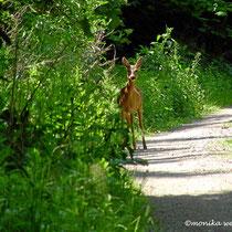 Begegnung im Wienerwald