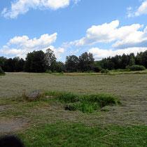 Blockheide - mehr unter http://www.waldviertel.at/naturpark-blockheide