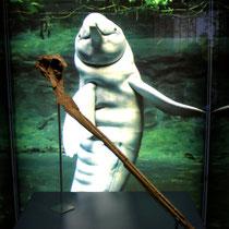 fossiler Delphinknochen