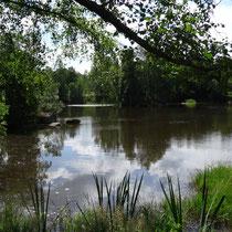 Blockheide - kleiner Teich