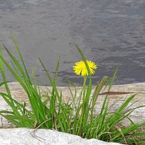 2014 Frühling am Fischteich