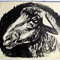Schaf - Tierportrait 1