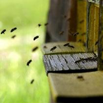 Motiv 13 - Bienen im Anflug
