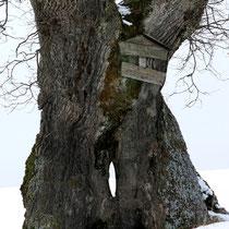 Motiv 14 - Winter 2