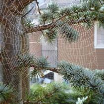 Motiv 2 - Spinnennetz