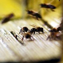 Motiv 9 - Vor dem Bienenstock