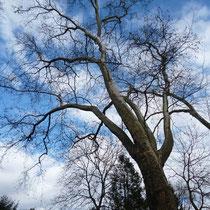 Motiv 8 - Lebensbaum