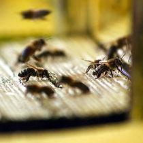 Motiv 12 - Vor dem Bienenstock