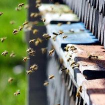 Motiv 15 - Bienen im Anflug