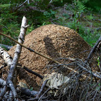 Motiv 4 - Ameisenhaufen