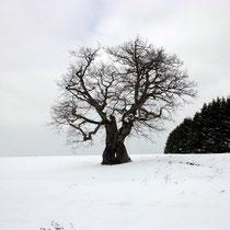 Motiv 13 - Winter 1