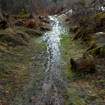 Im Roedelenwald