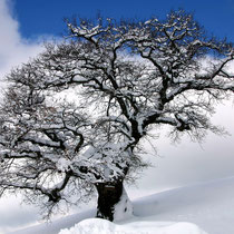 Motiv 16 - Winter 4