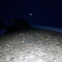 Am Col de Cheilon - 3243 M