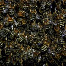 Motiv 2 - Im Bienenstock