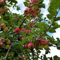 Motiv 6 - Apfel