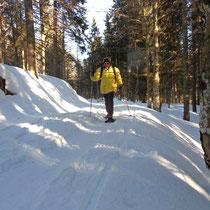 Abstieg im Seewald