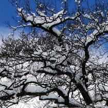 Motiv 15 - Winter 3