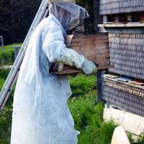 Motiv 16 - Imker Paul, Umsetzen eines Bienenstocks