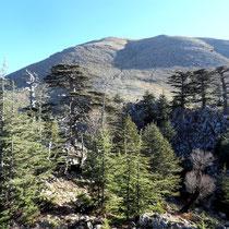 Waldgrenze vor Tahtali-Massiv
