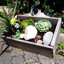Motiv 9 - Steinpflanzen