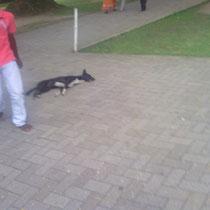 Fast alle laufen schon brav um die Hunde herum.Aber keiner hat ein ei Anti- Ungezifer Mittel.